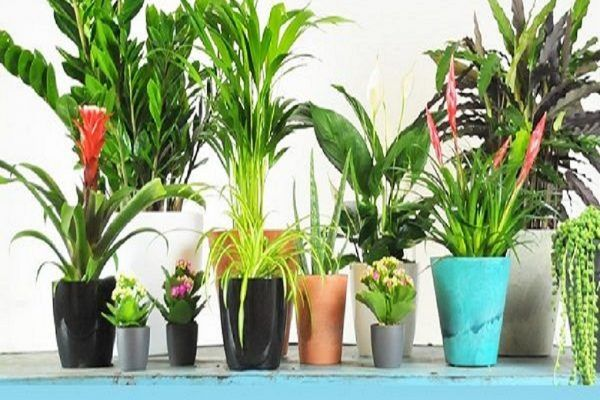 Plantas que purifican el aire