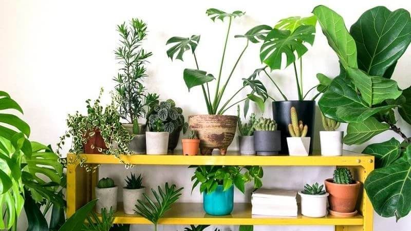 Plantas que purifican el aire de los interiores