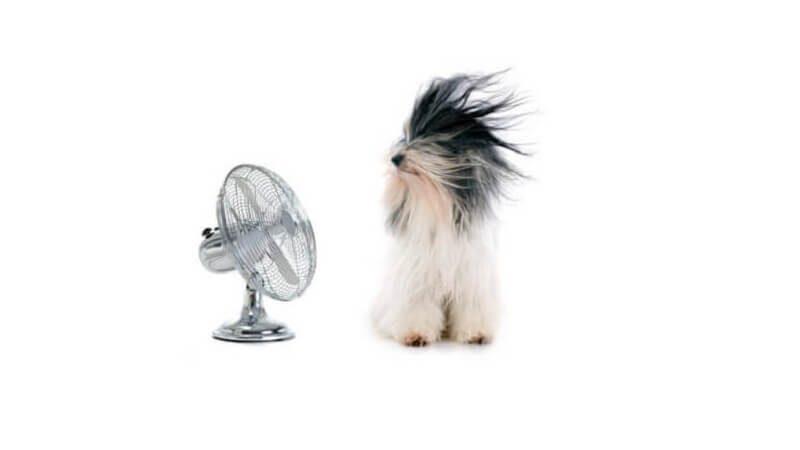 Mejor ventilador ionico